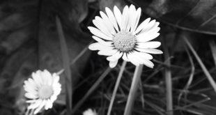 آموزش سیاه و سفید کردن عکس رنگی در فتوشاپ